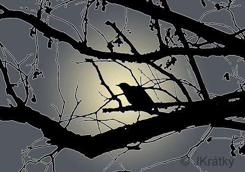 Noční zpěvák