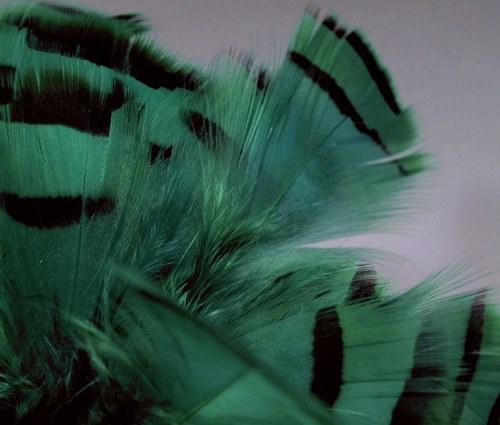 Smaragdové koroptví peří 10ks