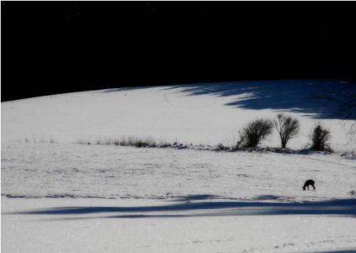 Doteky zimní ... kráčejme tiše