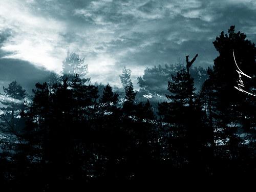 Mlhavý úsvit..