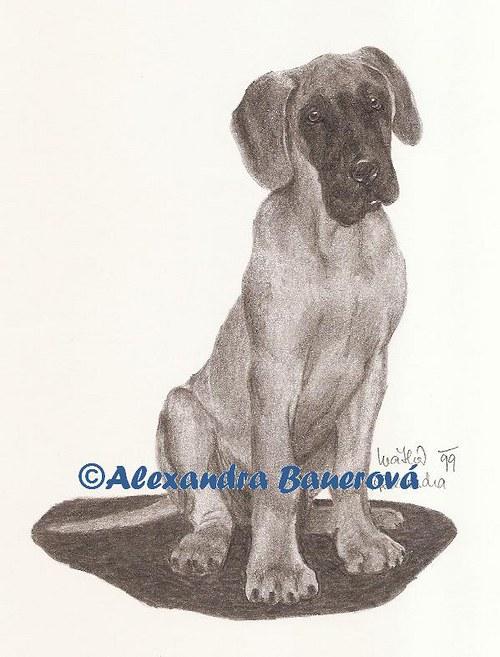 Německá doga - žlutá (štěně)