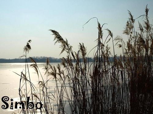 Idylka na rybníku SLEVA