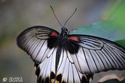 černobílá krása