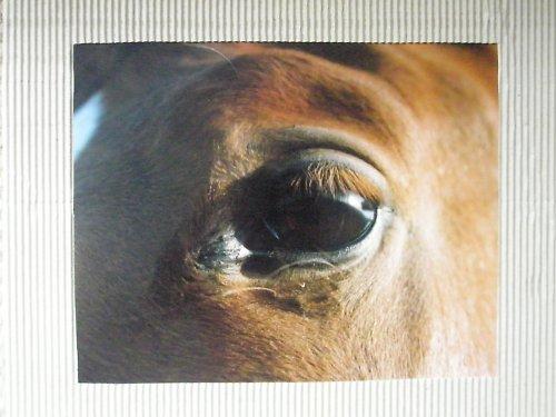 Z cyklu Krása koně..8