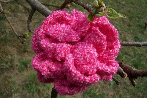 Jarní květ 1