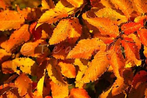Zahrabem se do listí