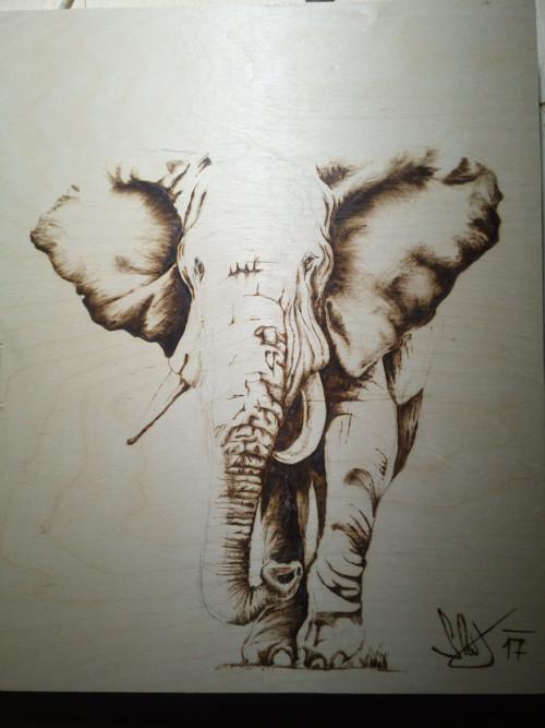 Pyrografie slon
