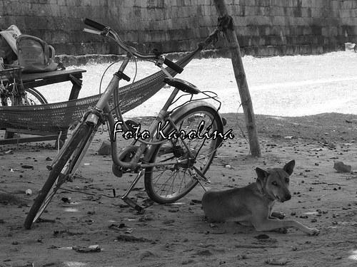 Fotografie Kambodža - Kolo a pes