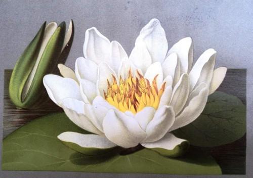 Letni kvety 1884 - orig. litografie serie