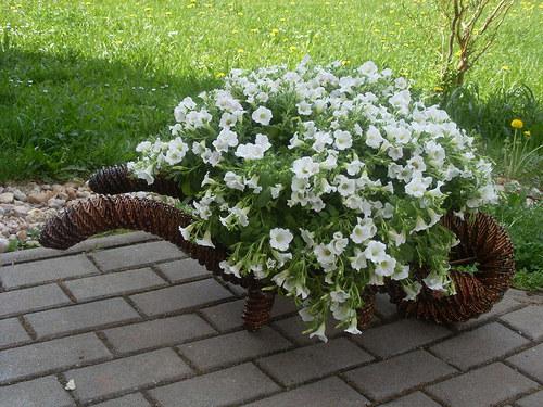 upletene kolecko s kvetinou