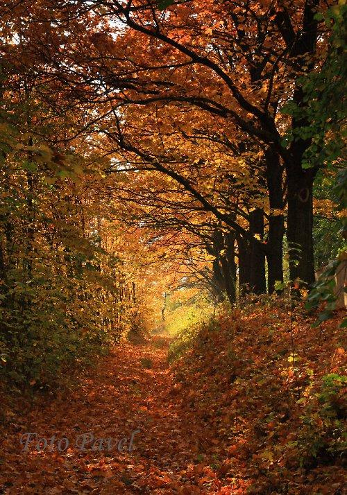 Záplava listí - Mělník - Na ráji
