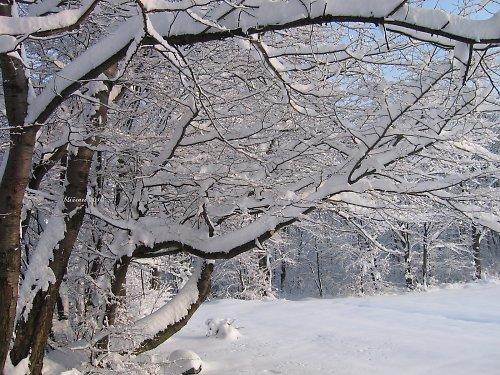Vzpomínka na zimu - cestou