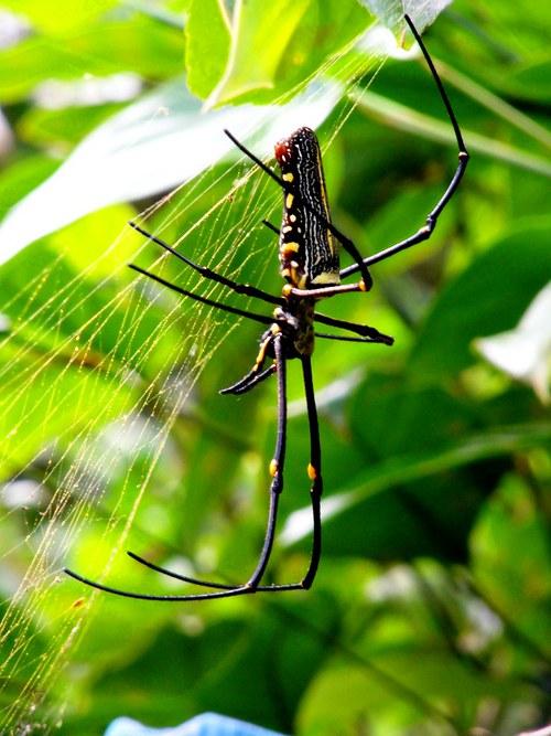 """Pralesní \""""Pavouček do dlaně\"""""""