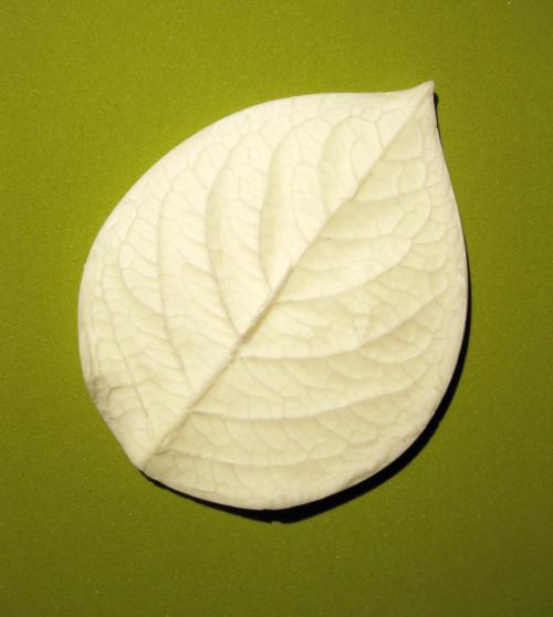 Žilkovač Hortenzie list