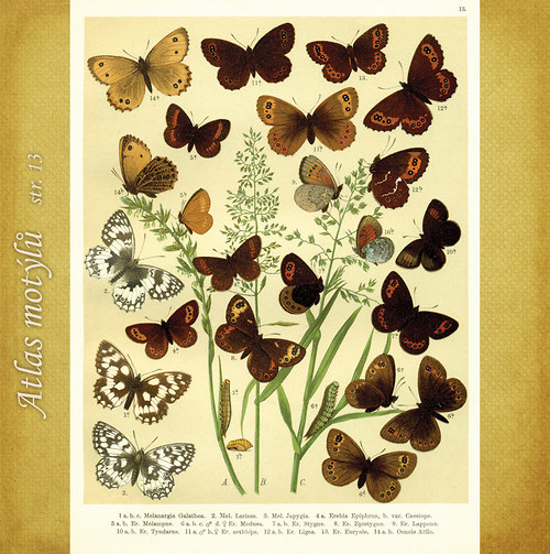 Motýli - str. 13 - formát A4