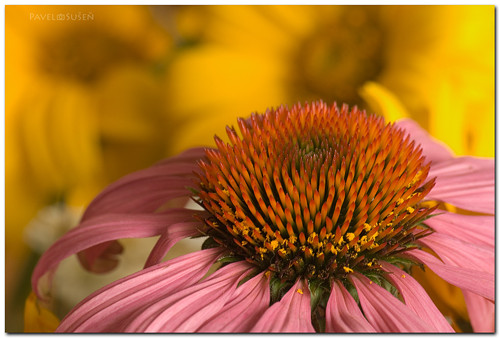 Krása květin III.