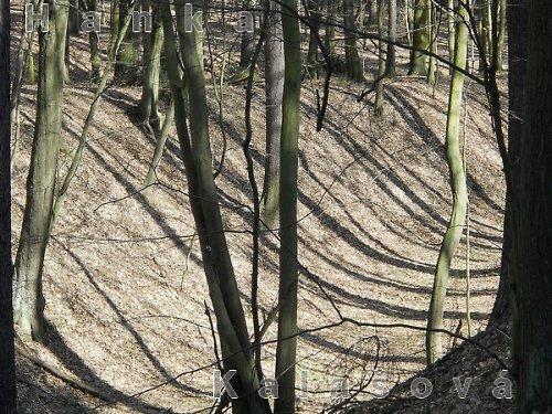 Fotografie stromů a stínů
