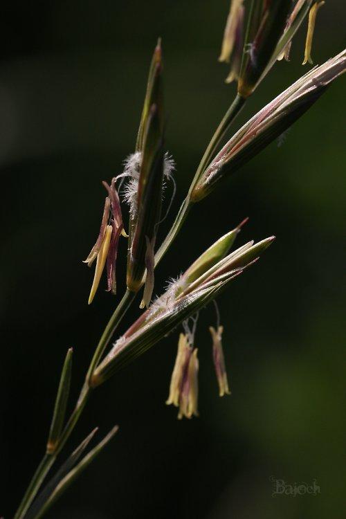 Stébla trávy