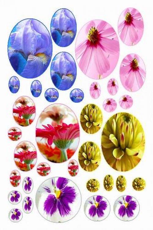 Makro květy (vzor 24)
