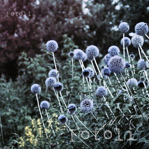 Čarovná zahrada