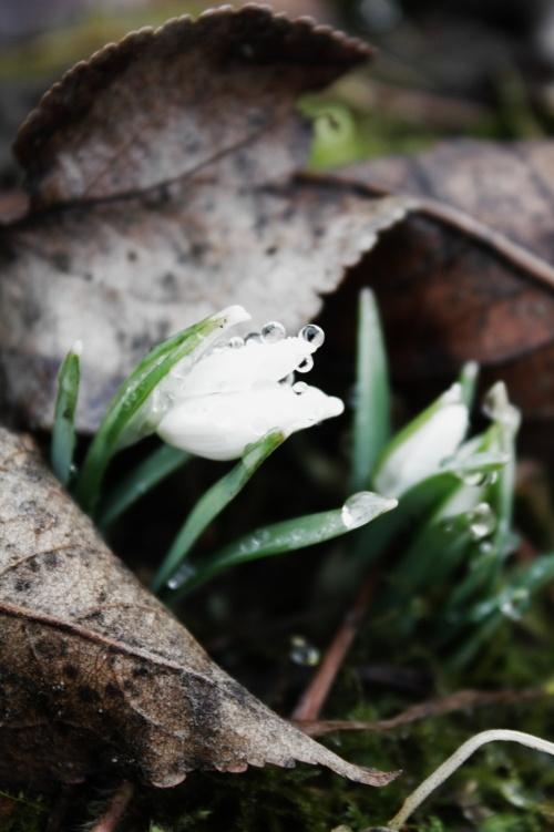 Malý sněžný anděl