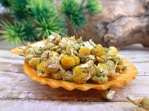 sušený květ heřmánku