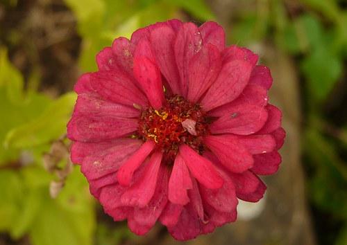 Podzimní květ již spatřil svět