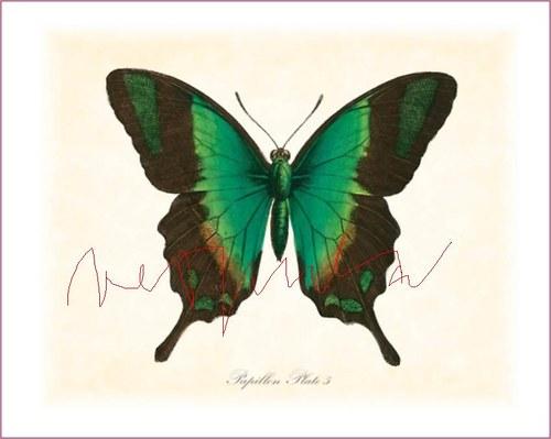 Motýli IV