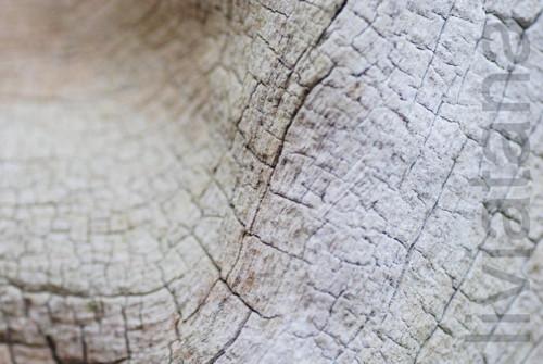 dřevěné vrásky IV