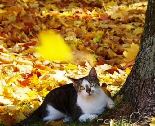 Kočičí podzim