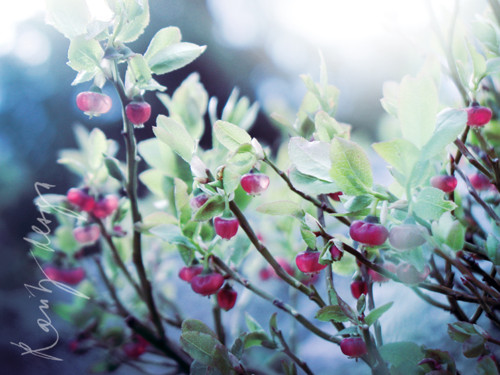 Spring V.