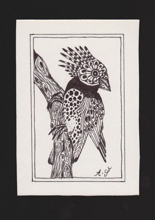 Ptáček druhý