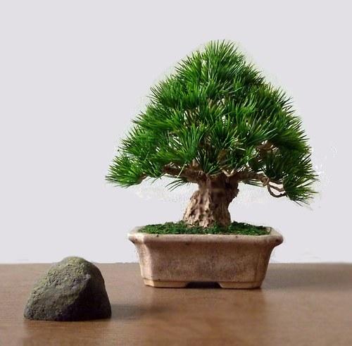 """handmade produkt \""""bonsaj who lives forever\"""""""