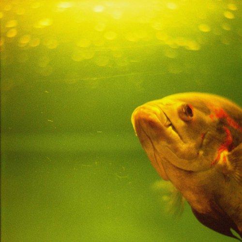 ...rybí blues zkus...
