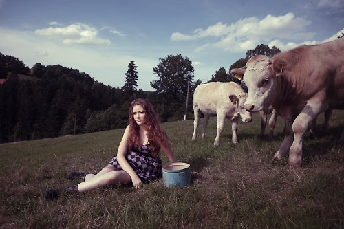 Lou and her cows - purple dice