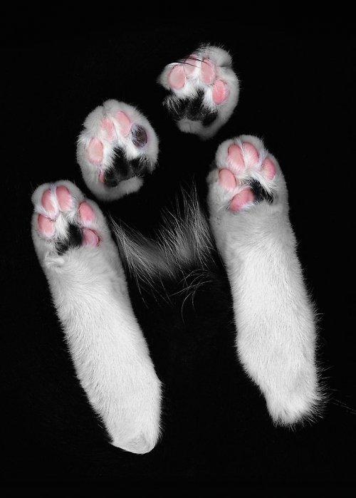Cat Scan (menší formát - A4)