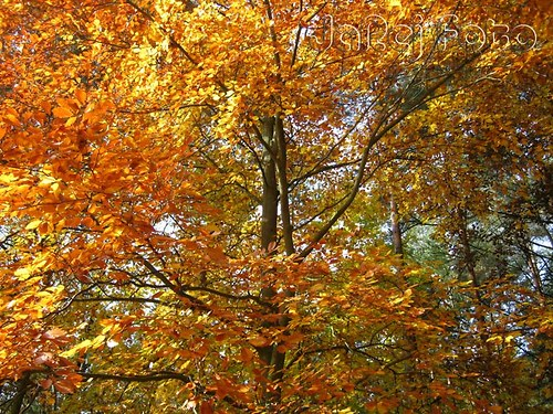 Žlutooranžové listí
