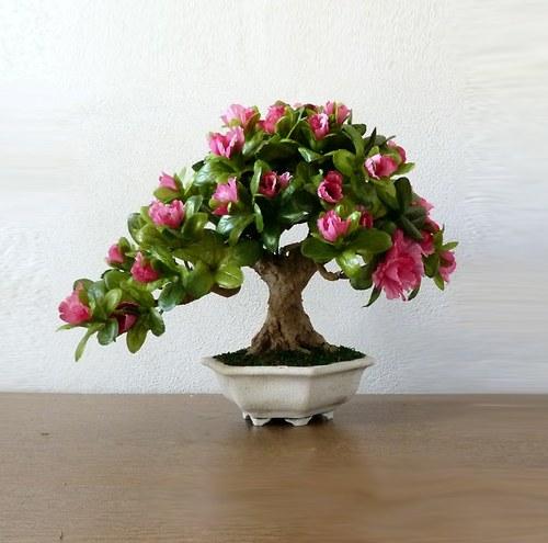 Kvetoucí bonsaj, která nikdy neopadá