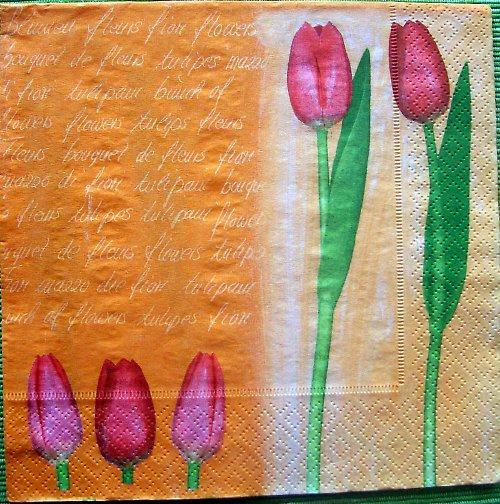 Tulipány v oranžové