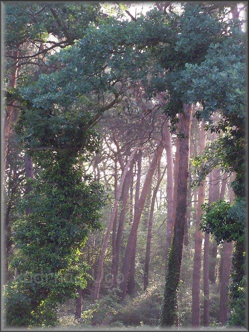 Ráno v lesíku....