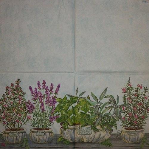 Bylinky v květináči
