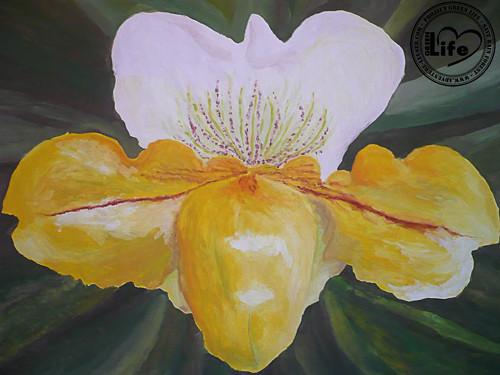 Orchidej (50 Kč na ochranu pralesa)