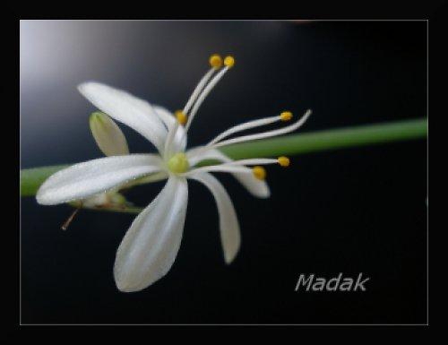 Bílý kvítek - autorská fotografie