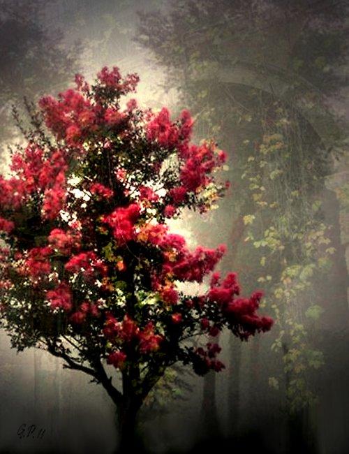 Růžový zázrak v husté mlze