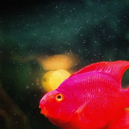 ...svatoJánská rybička...