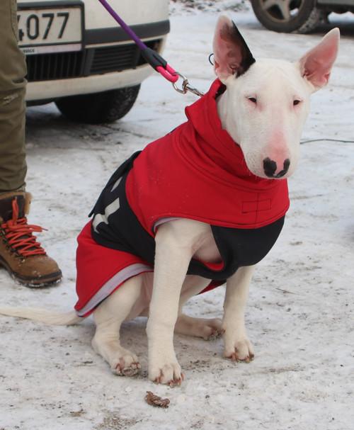 Softshellový obleček pro psa 50 cm