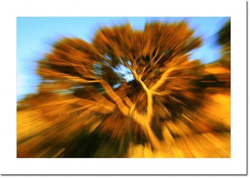la energía -  magická pínie
