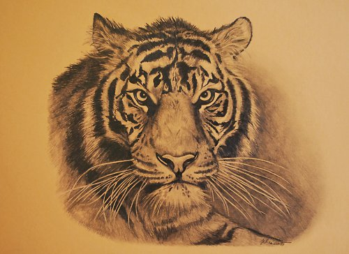 Originální kresba tygra - SLEVA !!!