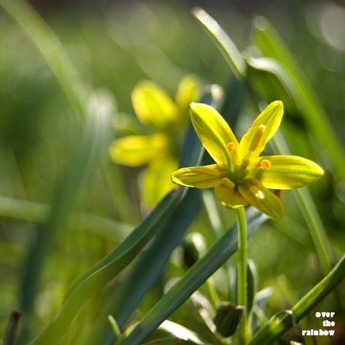 Spring impressions II - autorská fotografie