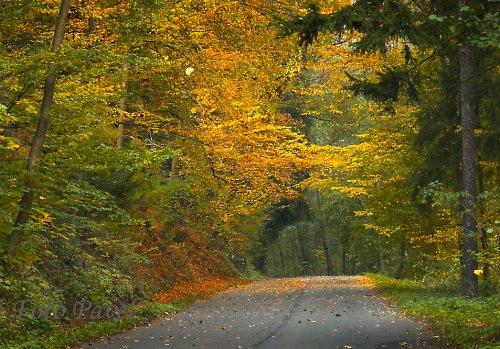 Cesta podzimem - Kokořínsko